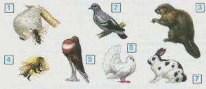 Стр 72 номер 2 учебник Окружающий мир 2 класс 1 часть