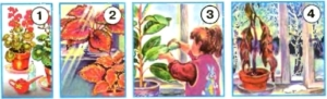 Стр 71 номер 4 учебник Окружающий мир 1 класс 1 часть